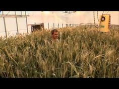 Discovery How Stuff Works : Wheat - YouTube