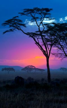 Tree - African sunset