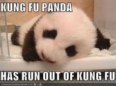 And cubs on pinterest kung fu panda tiger cubs and baby pandas