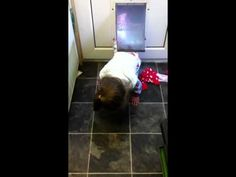 The baby can fit through the cat flap - Lyra demonstrating how Ellie broke into the house through the catflap!