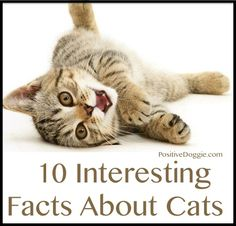 10 Interesting Facts About Cats - PositiveMed
