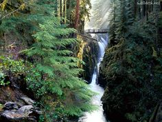 Bridge over Sol Duc falls, olympic national park, Washington