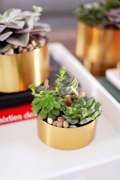 Make this brass succulent planter for just a few dollars!