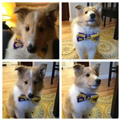 """Karson's feeling fancy, and is so ready for #LSU football season."""