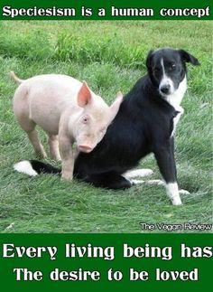 vegan heart, anim rescu, anim abus, go vegan, animal friends