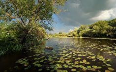"Márk Borbély 10/apr/2013  ""Still life on backwater""  Location: Gyirmót backwater, Hungary"