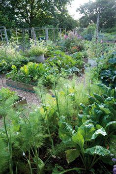 woolf garden, veggie gardens, virginia woolf, green garden, carolin arber