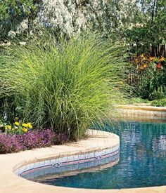 Pool landscaping idea: miscanthus grass