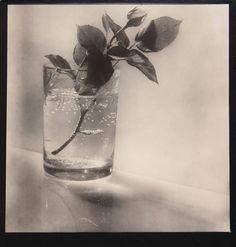 Josef Sudek (1896-1976) Bouton de rose, 1954 Tirage argentique d'époque signé au crayon sous l'image. 19,6 x 19,2 cm Estimation: 4 000-5 000 € Adjugé 12392 €