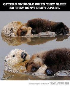 Snuggling otters ~ so cute!