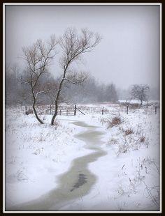 A peaceful snowfall, Ashtabula county, Ohio | Mark K.