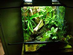 10 gallon dart frog vivarium dart frog vivarium 8 10 Gallon Vivarium