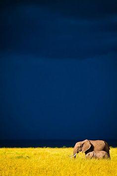 elephants, anim, sky, colors, blue skies, beauti, yellow, africa, blues