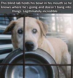 cool-blind-dog-bowl-mouth