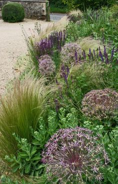 Stipa & Allium christophii yard garden, front gardens, planting combinations, allium christophii, cottage gardens, drought resistant garden, ornamental grass garden, plant combinations, salvia garden