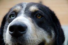 Blue brown eyed dog by DreamingLizard Studio