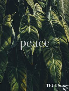 Inner peace is a priority ⭐️        . . . . . .  . . . . .. . . . #trueluxurylife #luxury #organic #wellness #health #lifestyle #healthylifestyle #selfcare #selflove #nature #luxlife #luxurylife #peace #meditation #yoga #inspiration #inspo #inspoquote #luxurylifestyle #mindfulness #healthyrecipes #blog #eco #ecoluxury #innerpeace #natural #love #sustainableliving #sustainablelifestyle #livewell