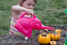 Life with Moore Babies: Growing Pumpkins in Pumpkins