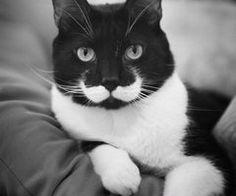 Cat Moustache