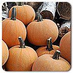 Organic Winter Luxury Pumpkin