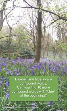 """Bluebell and Bluejay are compound words. Can you find 10 more compound words with """"blue"""" at the beginning? #WhenSpellingMatters"""