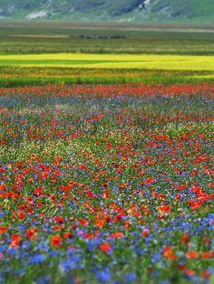 June Bloom Event, Castelluccio di Norcia