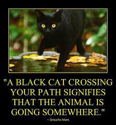 A black cat crossing your path