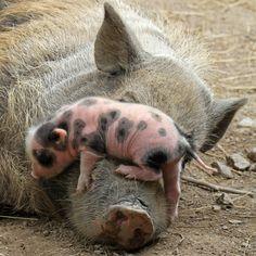 Gentle Mommy, Cute B...