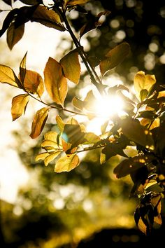 The simple beauty of sunlight through a tree.