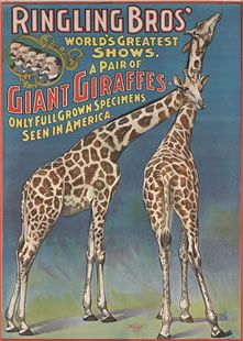 Jiraffe Poster from the Ringling Bros. Circus Museum in Sarasota, Florida.  It's a great museum.  Go if you have the chance.