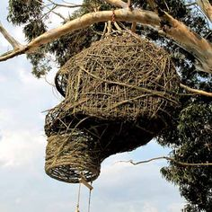 Tree top nest for Humans in South Africa, based on the design of the weaver bird.