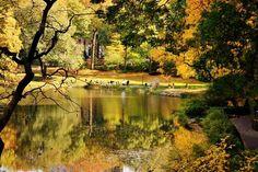 The Pond. By Sammy D. Sanchez. #fallfoliage #centralpark fallfoliag centralpark