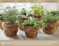 Little burlap wrapped pots of herbs