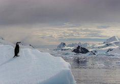 Antarctica: A Lone Penguin