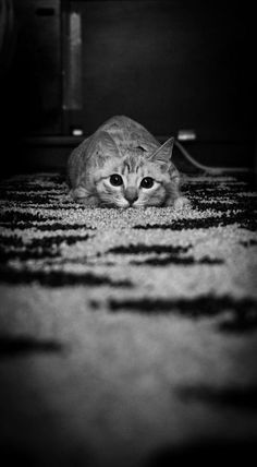 Cat! :) - Click for More...