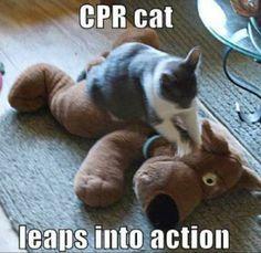CPR cat