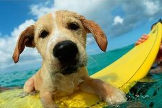 surf's up pup