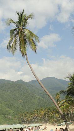 Playa Grande. Choroni. Estado Aragua. Venezuela