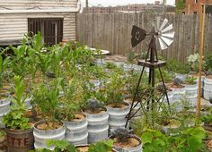 Beer keg container garden!