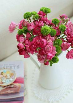 Pink Ranunculus   Flickr - Photo Sharing!