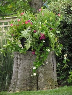 Tree trunk as planter stand ~ Great idea for landscaping...