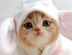 cats, costum, funny bunnies, baby kittens, ador, baby animals, kitty, easter bunny, funny kitties