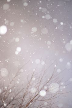 gently falling snow
