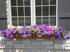Window Box Contest Entry Our Flowers