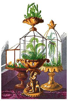 The Wardian case, or fern case, was the forerunner of the modern terrarium and a popular method of maintaining a small indoor garden. First introduced in London by Dr. Ward in the early 19th century, the Wardian case became a highlight of Victorian drawing rooms.