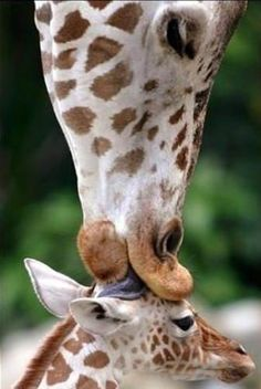 A mother's love is a mother's love.