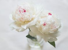 White Peonies photograph spring flowers shabby by lilypadprints, $15.00 #peonies