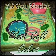 Plant cell model cake. What fun!