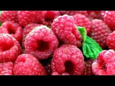 Berries at Discounted Prices http://www.tytyga.com/Black-Hawk-Black-Raspberry-p/black-hawk-black-raspberry.htm