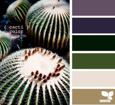 cacti color...front porch palette